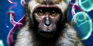 Monkeys Who Received Airborne Ebola Virus Died In 4-5 Days After Inhalation