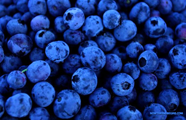 blueberries-antioxidants-heart-health-cancer-fighter-improved-eyesight-anti-aging-super-food