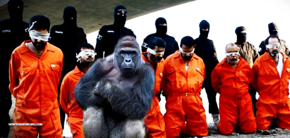 liberal-media-covered-harambe-gorilla-six-times-more-than-isis-killing-christians-nteb