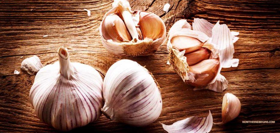 garlic-will-prevent-mosquito-bites-zika-virus-health-benefits