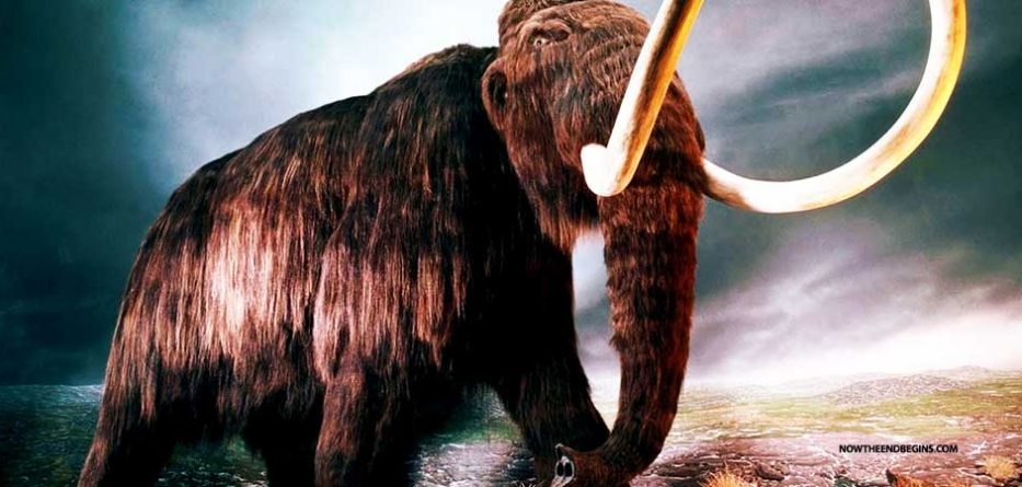 scientists-reviving-long-extinct-woolly-mammoth-hybrid