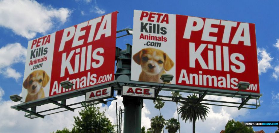 peta-fined-50-thousand-dollars-after-killing-little-girls-dog-maya-chihuahua-nteb