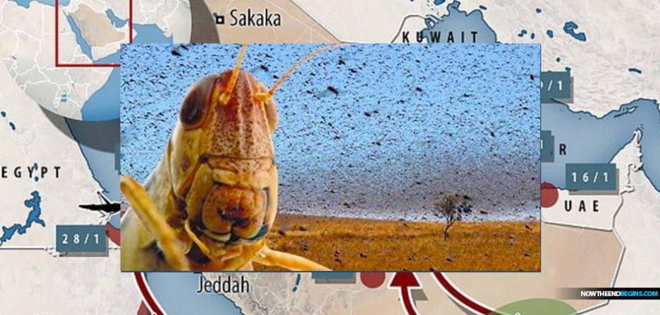 united-nations-warns-locust-outbreak-red-sea-egypt-saudi-arabia-2019-biblical-plague-locusts